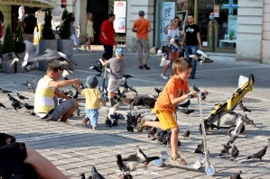 Brașov, main square, Romania, kid, pigeon