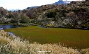 Chile, Patagonia, Torres del Paine, W circuit, hiking, trekking, travel, photo, marsh, bog peat,Samsung Galaxy