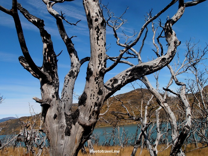 Chile, Patagonia, Torres del Paine, W circuit, hiking, trekking, travel, photo, dead tree,Olympus