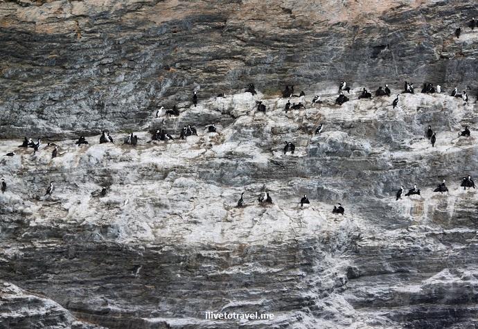 Chile, Patagonia, glacier, Puerto Natales, outdoors, nature, tourism, travel, Canon EOS Rebel, wildlife