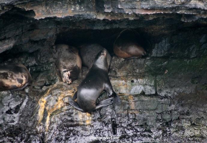 Chile, Patagonia, glacier, Puerto Natales, outdoors, nature, tourism, travel, Canon EOS Rebel, seal, wildlife
