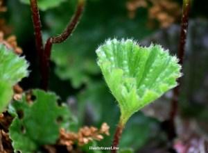 Flora, Patagonia, Serrano glacier, Chile, photo, vegetation, Canon EOS Rebel, green