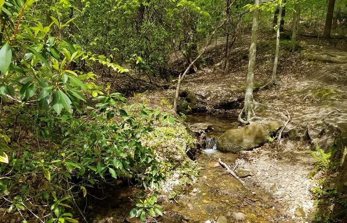 Atlanta, hiking, Georgia, mountains, nature, outdoors, creek, trees, forest