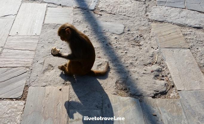 Pashupatinath, temple, Kathmandu, Nepal, templo, Hinduismo, cremation, Asia, explore, travel, photo, architecture, monkey