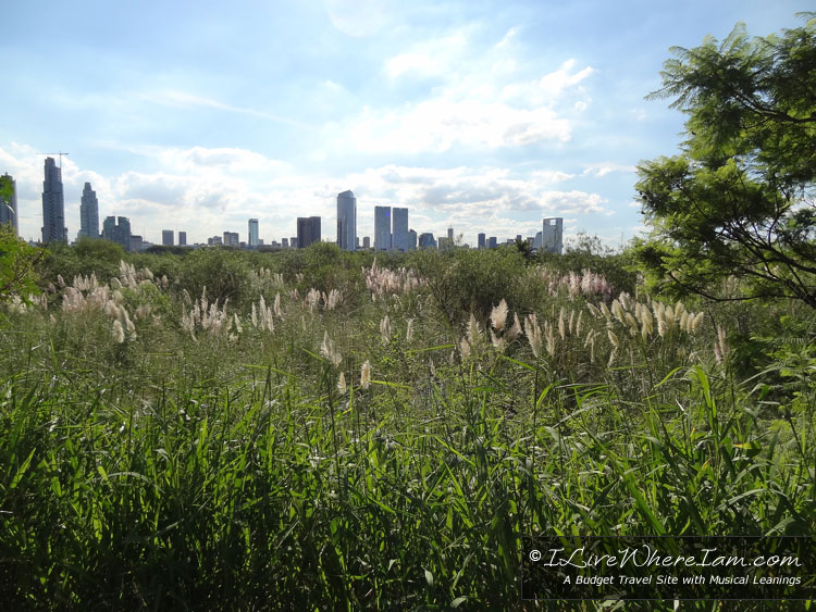 View of the Buenos Aires skyline from Reserva Ecológica.