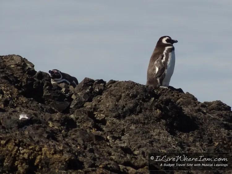 Penguin Colony near Ancud