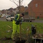 Tree planting….