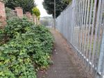 All done!  The pathway to Chaucer School has been cut back.  Before and after pi...
