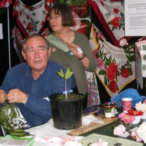 2016 - Me giving a grafting demonstration at NSW Camellia Show Ravenswood Girls School Gordon
