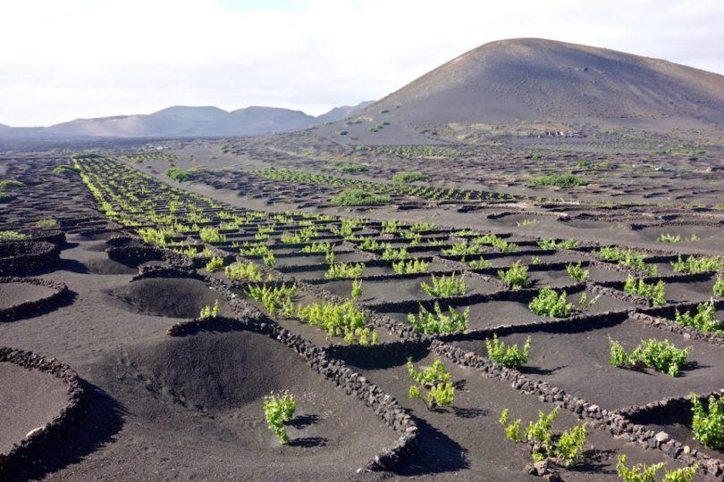 Tour del vino a Lanzarote