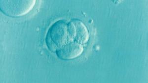 Frozen Embryos Custody Dispute