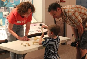 Dr. Meredith Mahoney demonstrates how Museum collections are used to identify found bones.