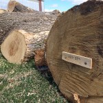 Reclaimed ash logs include location where tree was felled.