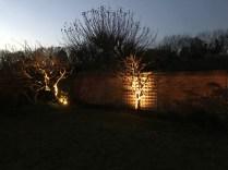 NARLY TREE - illuminating Gardens, Garden Lighting Installation Gallery