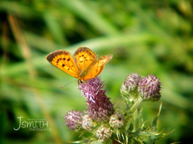 The beauty of green is the way it contrasts with many colours, helping us see the beauty of butterflies & flowers.