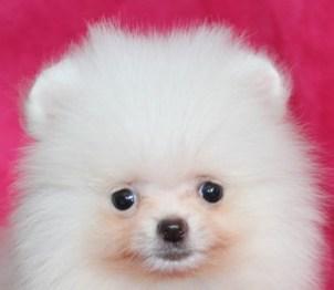 dog_img_1_8c3417930ff6