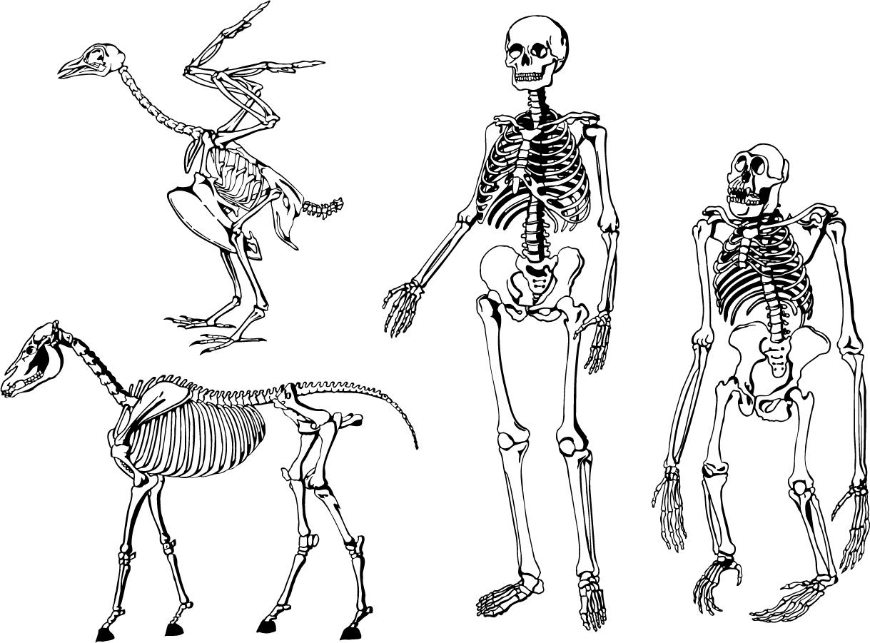 Structure Human Skeleton Worksheet