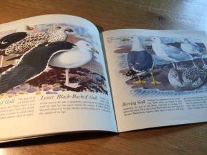 Birds of the Estuary, C. F. Tunnicliffe