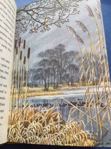 What to look for in Winter, A Ladybird Book, Tunnicliffe