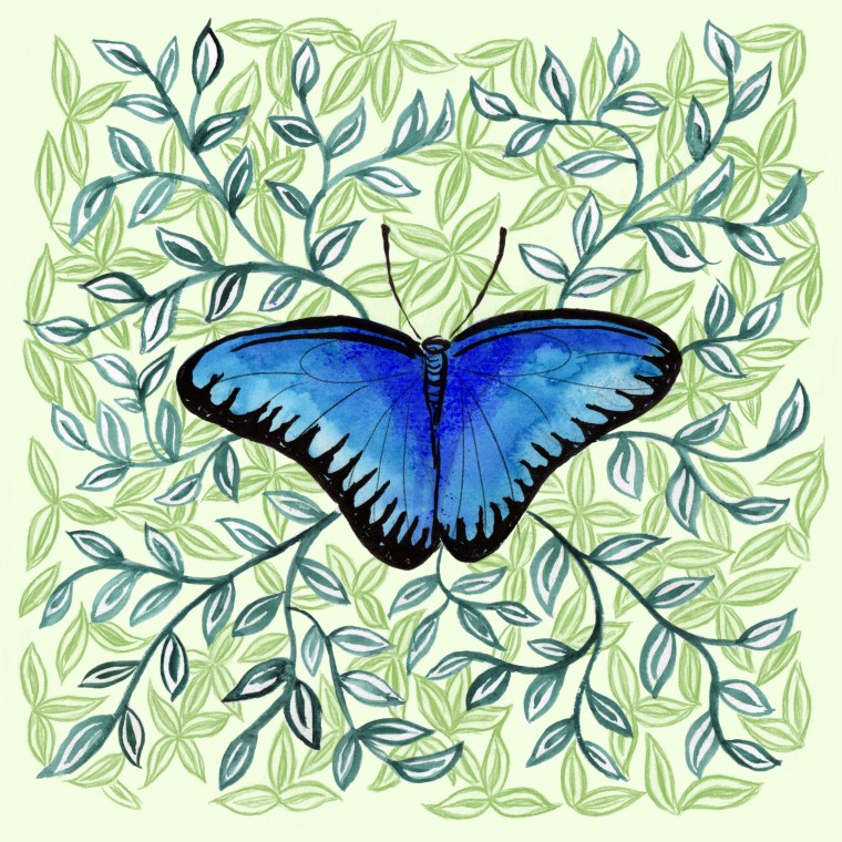 Illustration from Stratford Butterfly Farm