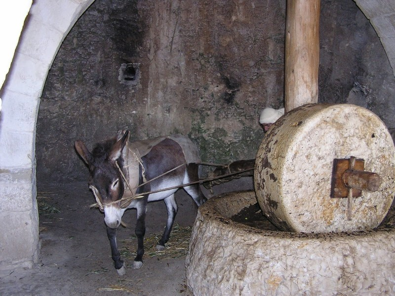 Donkey with a Millstone. Unknown photographer.  Via IllustratedPrayer.com