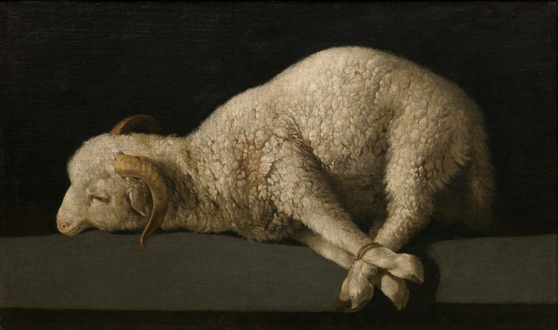Agnus Dei, by Francisco de Zurabarán, c. 1635-40. Museo de Prado, Madrid, Spain. Via IllustratedPrayer.com