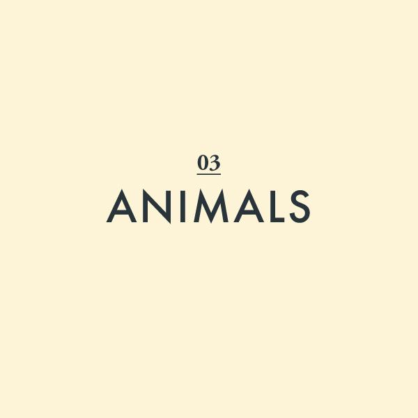 03-Animals