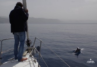 dolphins-sicily-sailing-6
