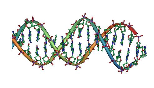 DNA doppia elica