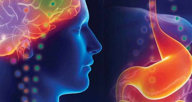 cervello-enterico-e-centro