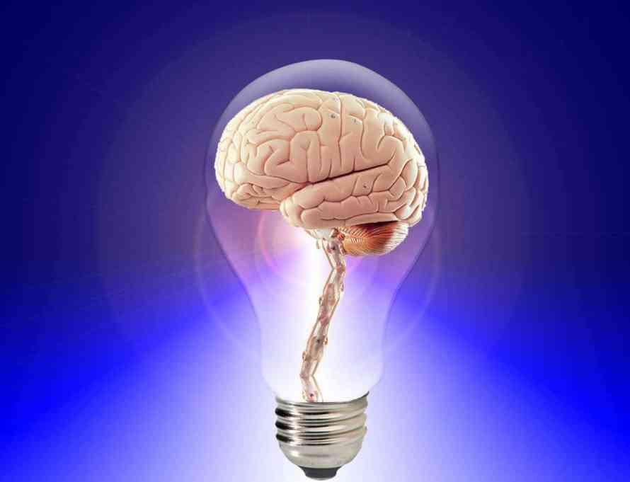 brain, think, human