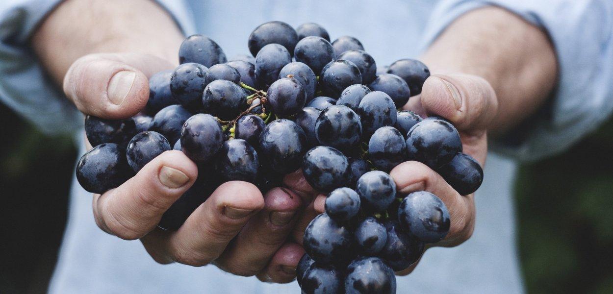 grapes, bunch, hands