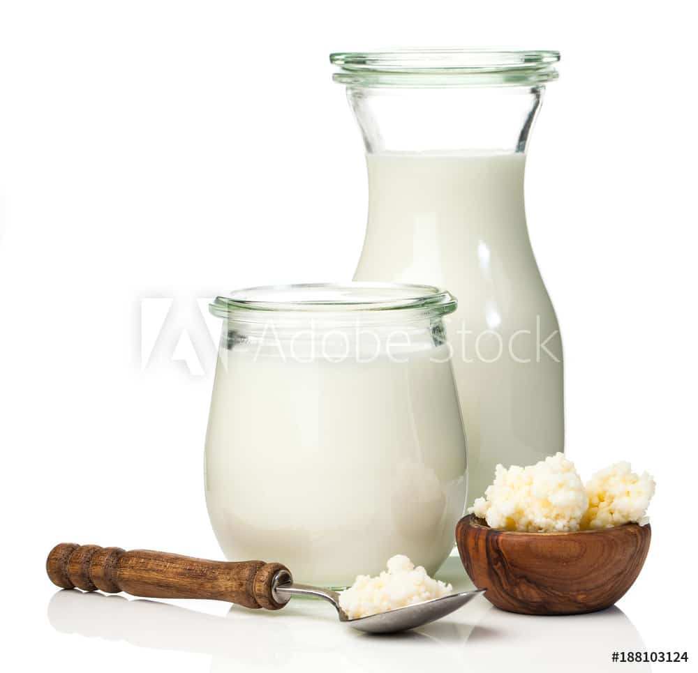 "Milk kefir grains. milk kefir, or búlgaros, is a fermented milk drink that originated in the Caucasus Mountains made with kefir ""grains"", a yeast/bacterial fermentation starter."