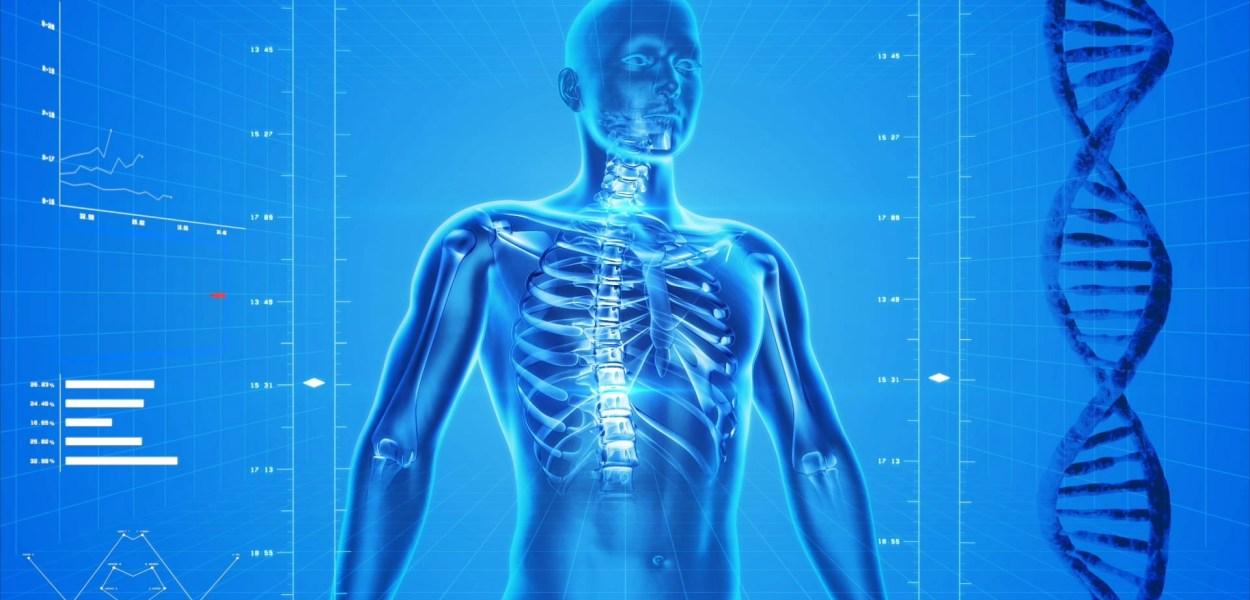 human skeleton, human body, anatomy