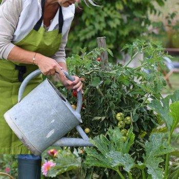 benessere-o-cura-delle-piante-green-plastic-service