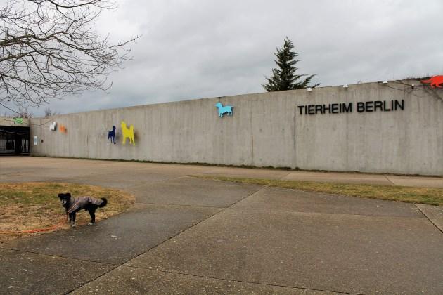 Tierheim in Berlin-Falkenberg