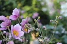 L'Albereta blooms