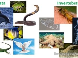 klasifikasi hewan