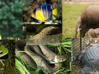 Klasifikasi Hewan Vertebrata Dan Invertebrata