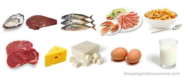 10 Makanan yang Mengandung Vitamin B12 (Kobalamin) Tertinggi