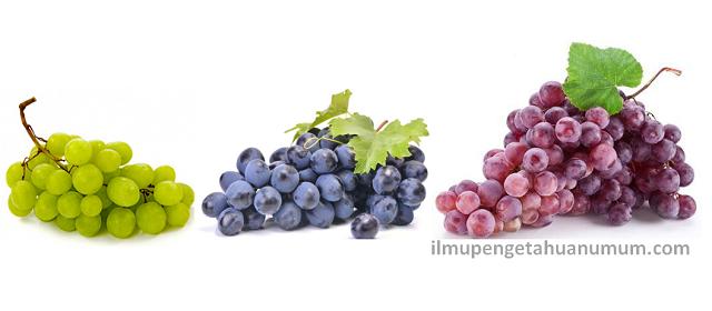 Kandungan Gizi Buah Anggur (Nutrisi Anggur) dan manfaat anggur bagi kesehatan