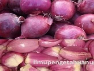 manfaat bawang merah dan kandungan gizi bawang merah