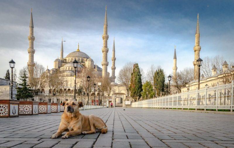 cane davanti a una moschea, i musulmani odiano i cani?, i cani nell'Islam, perché i musulmani odiano i cani?