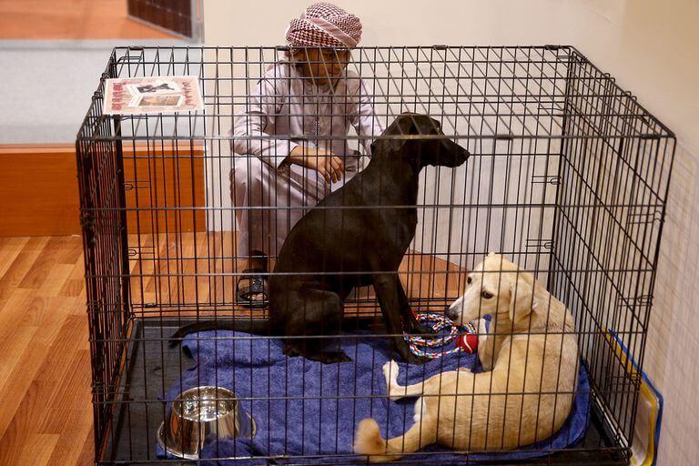 i musulmani odiano i cani?, i cani nell'Islam, perché i musulmani odiano i cani?,