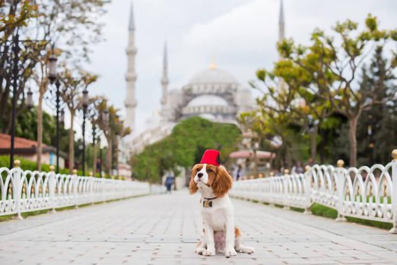 i musulmani odiano i cani?, i cani nell'Islam, perché i musulmani odiano i cani?