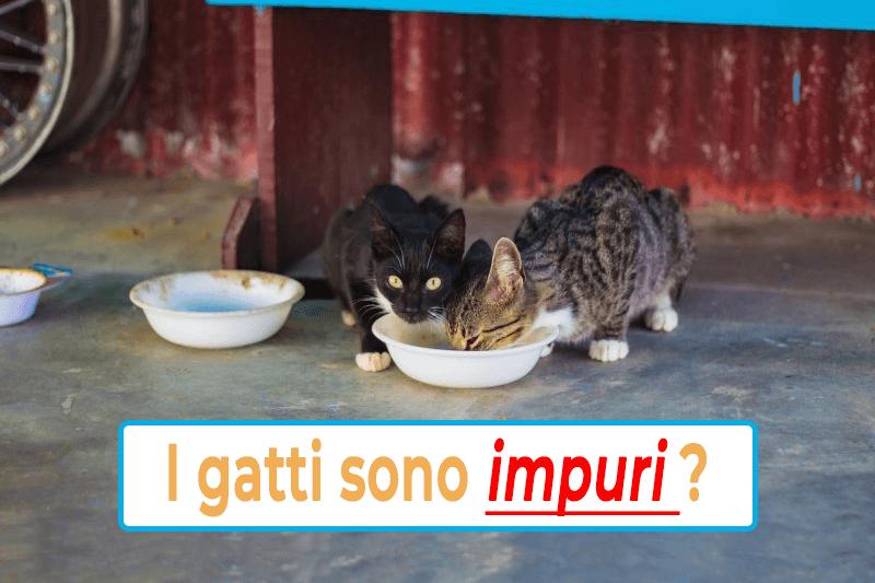 i gatti sono animali puliti?, i gatti secondo l'Islam, i gatti sono impuri?, i musulmani amano i gatti, l'Islam ama i gatti, musulmani e gatti, i gatti nell'Islam, i gatti nella storia islamica, i gatti nei paesi arabi