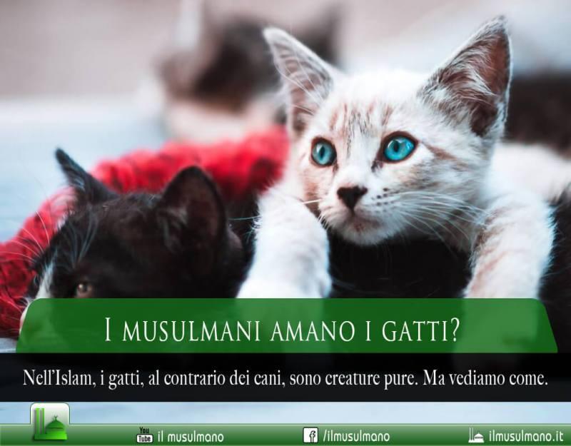 I musulmani, i gatti e l'Islam