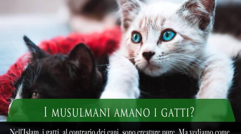 i musulmani amano i gatti, l'Islam ama i gatti, musulmani e gatti, i gatti nell'Islam, i gatti nella storia islamica, i gatti nei paesi arabi