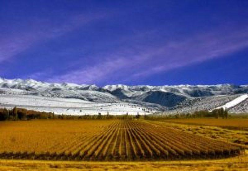vigneto in Argentina - Mendoza