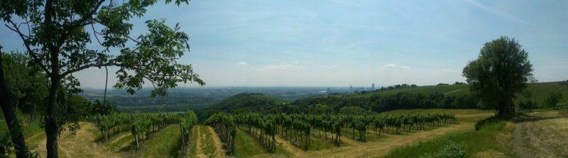 Vigne Metropolitane: Vienna